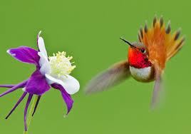 Hummingbird Flowers 30 Nicest Hummingbird Pictures Creativefan