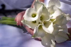 Wedding Flowers Cape Town Wedding Flowers And Symbolism The Arum Lily