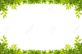 leaves frame isolated on white background stock photo picture and