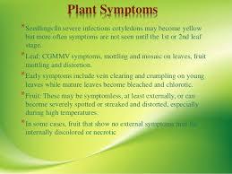 Symptoms Of Viral Diseases In Plants - viral diseases of bottle gourd