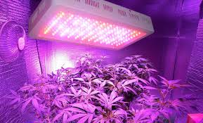 Led Grow Lights Cannabis How To Grow Weed Indoors For Beginners Step By Step Guide 2017