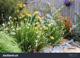 small native plants for australian gardens beautiful australian garden full native plants stock photo