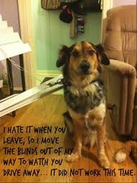 Dog Blinds Oh No Not The Blinds Factory Direct Blinds