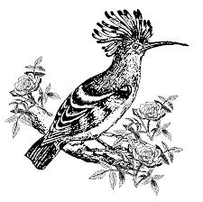 exotic bird clip art at clker com vector clip art online
