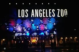 Zoo Lights Pictures by La Zoo Lights Mami Tales