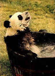 Panda Kitchen And Bath Orlando by History Of Panda Land