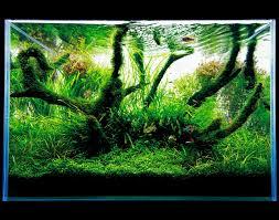 Nature Aquascape Ada Nature Aquarium Aquascape The Green Machine