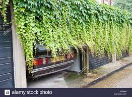 english car parked at semi open garage covered in ivy stock photo