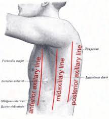 Human Anatomy Planes Of The Body Anatomical Plane Wikipedia