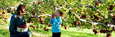 pick your own ct lyman orchards