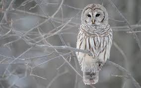 owl on tree branch portrait wallpaper 1280 800 birds wallpapers