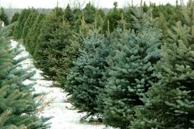 real christmas trees for sale where to buy real and christmas trees in beijing the beijinger