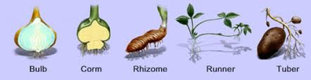 Reproduction In Flowering Plants - yr 9 topic 7 reproduction in plants amazing world of science