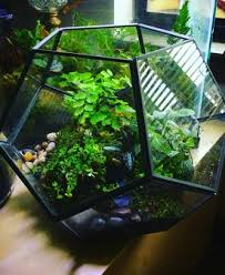 greenery in glass terrariums terrarium plants office plants