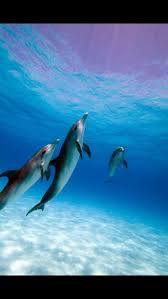 787 best dolphins playing images on pinterest ocean life