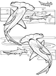 innovative ocean coloring page best coloring k 3957 unknown