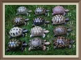 sw cosy tortoises garden ornaments reptile forums
