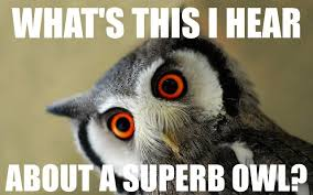 Superb Owl Meme - writing about writing and occasionally some writing potpourri