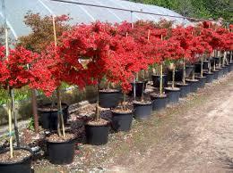 albero giardino e tempo di piantare un nuovo albero in giardino giardinaggio