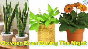 Air Purifying Plants 9 Air by 9 Plants Which Give Out Oxygen Even During The Night Youtube