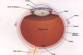 What Structure Of The Eye Focuses Light On The Retina Eye Anatomy