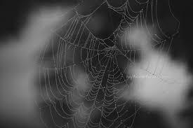 spiderweb fine art photography spider web halloween black