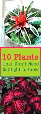 sunlight l for plants low sunlight plants searchwise co