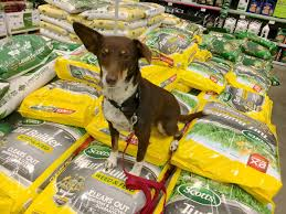 dog gone problems how to keep your dog safe around weed killer