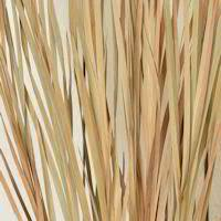 dried grasses grass dehydrated grass