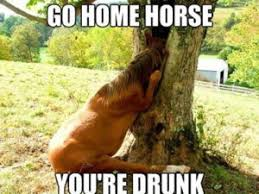 Horse Birthday Meme - horse memes best collection of funny horse pictures