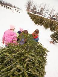 8 christmas tree farms we love midwest living