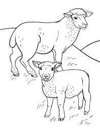 free sheep coloring