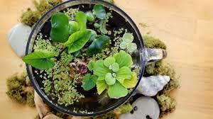 indoor plants that grow in water youtube