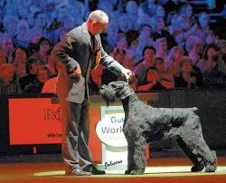 affenpinscher crufts 2014 43 best crufts supreme champions images on pinterest dog breeds