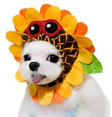 Halloween Costume Ideas Dogs Maltese Dog Halloween Costume Dog Halloween Maltese Dog Dresses