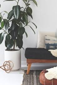 Home Decor Plants Living Room by Home Trends Our Favorite Chic Indoor Plants And Modern Planters