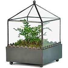 amazon com h potter terrarium kit small includes premium live