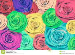 Colorful Roses Colorful Roses Background Stock Photo Image 58301333
