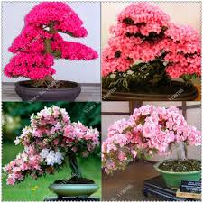 compare prices on japanese bonsai tree online shopping buy low