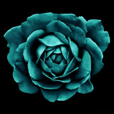 teal roses dramatic teal green portrait photograph by jennie schell