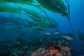ocean life oceans u s national park service