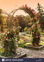 Rose Trellises Rose Garden Trellis Morning Stock Photos U0026 Rose Garden Trellis