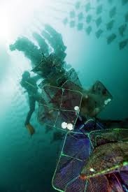 blog archive disaster hit areas how diving can help