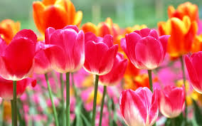 blooming flowers flowers blooming background images wallpaper