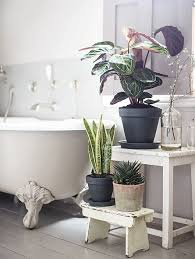 tranquil bathroom ideas best 25 tranquil bathroom ideas on bathroom paint