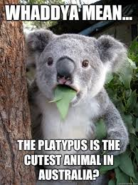 Platypus Meme - whaddya mean the platypus is the cutest animal in australia