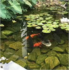 Aquascape Com Pond Restoration Renovation Service Al Gulf Shores Baldwin County