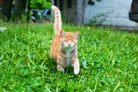 my blind cat rey enjoying our backyard jungle rebrn com