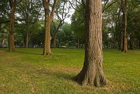 free tree trunk images pictures and royalty free stock photos