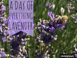 a day of everything lavender backyard adventure my wandering